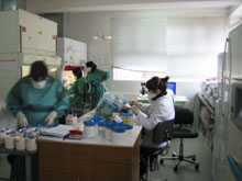 Laboratory technicians processing diagnostic tests at the National Tuberculosis Reference Laboratory, Tbilisi, Georgia.